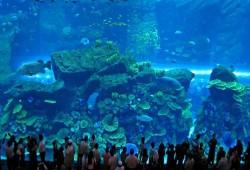 Así es el Dubai Mall, el centro comercial más lujoso del mundo