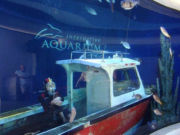 Conoce espectacular acuario interactivo de Cancún imagen