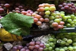 Fiestas del Vino en Querétaro