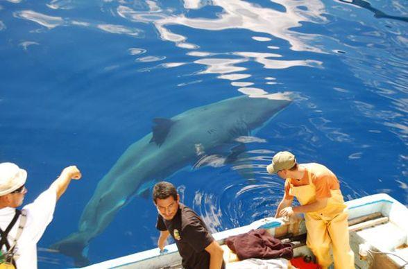 México, el reino del gran tiburón blanco